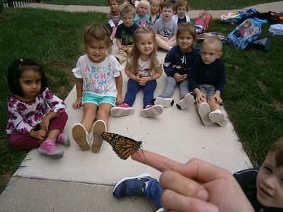 Monarch Butterflies  2018