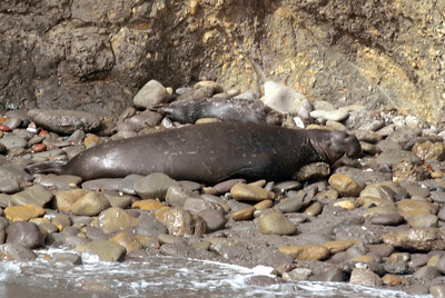 Seals, Sealions