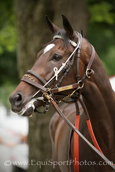Miss Besilu (Medaglia d'Oro) before the Alabama (Gr I) at Saratoga Racecourse 8/16/14. Trainer: Bill Mott. Owner: Three Chimneys Farm & Besilu Stables