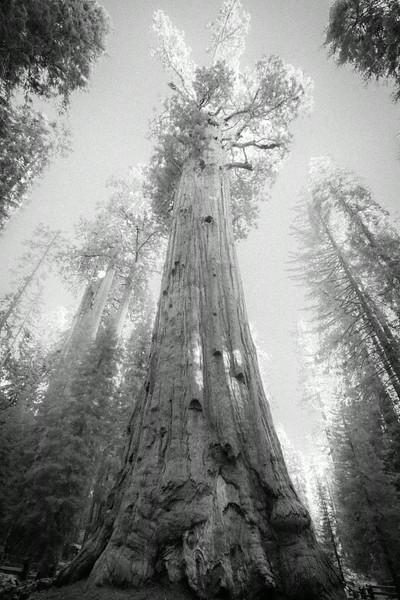 20140823_sequoia_0029.jpg