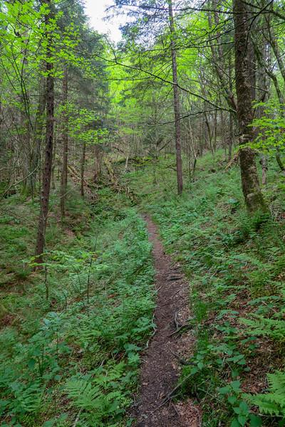 Mountains-to-Sea Trail -- 5,280'