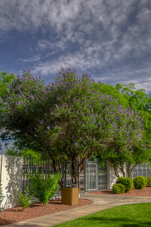 Vitex in the Landscape