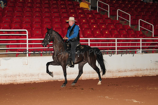 23 - Classic Pleasure Horse - Horse 15 Yrs Over
