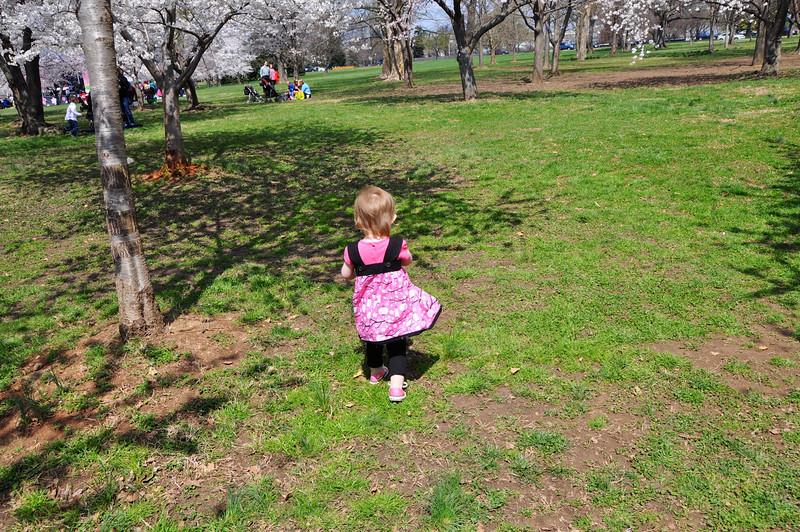 Cherry Blossoms 2014 063.jpg