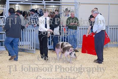 2014 KISD Livestock Show Swine Class 4