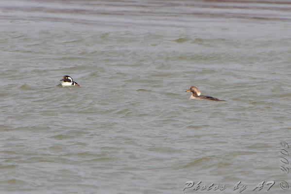 2009-12-14 Riverlands Migratory Bird Sanctuary