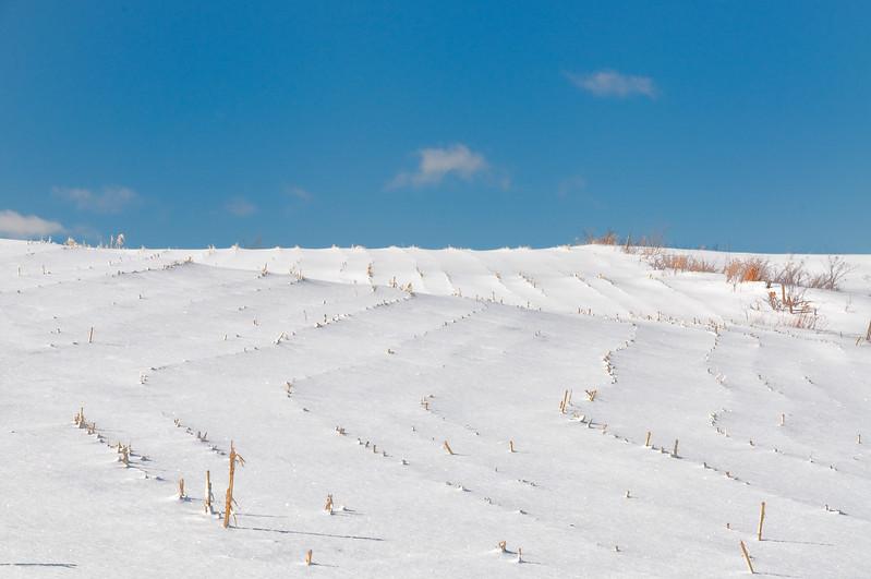 Winter scenes-11.jpg