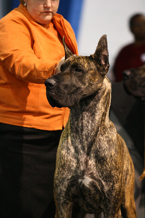 Open Brindle Dog