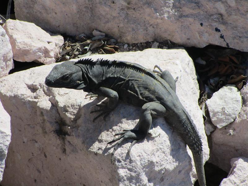 Mexico2015 061.JPG