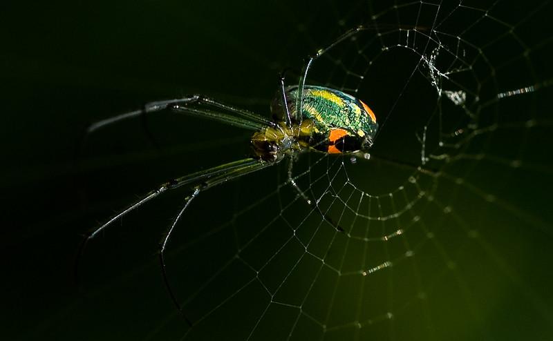 spider-22.jpg