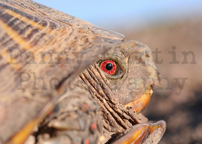 Turtles & Crocodilians - Stock Photos