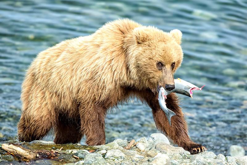 Alaska_2013_FH0T9384.jpg