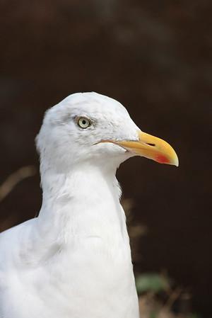 Oiseau d'eau : divers