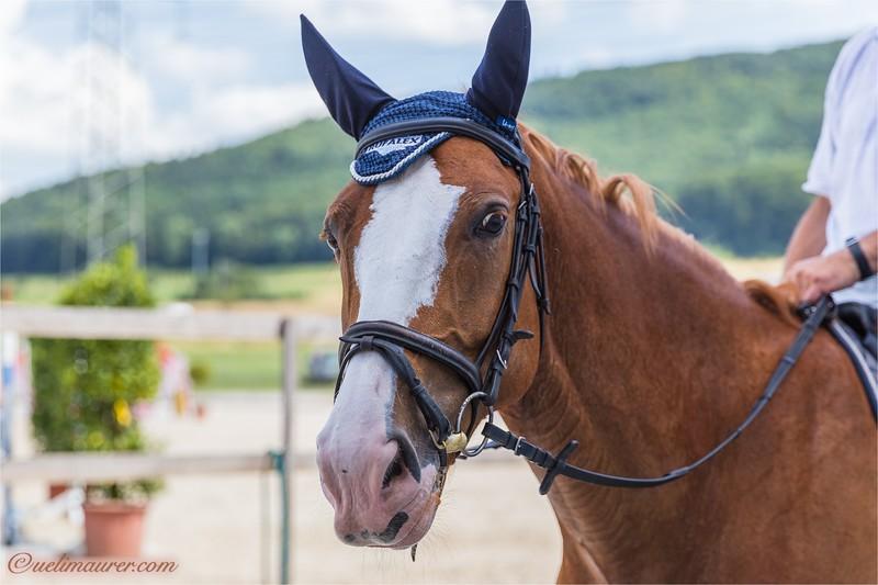 2017-07-07 Pferdesporttage Birkenhof -2507.jpg