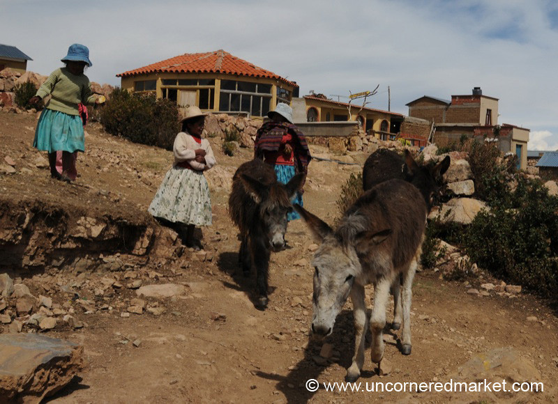 Donkeys On Their Way Home - Isla del Sol, Bolivia