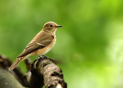 Birds, Bulgaria, 2017