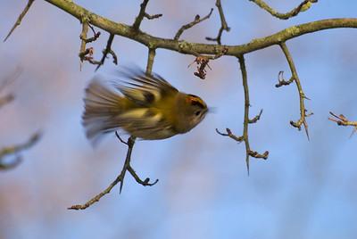 HWT Birds