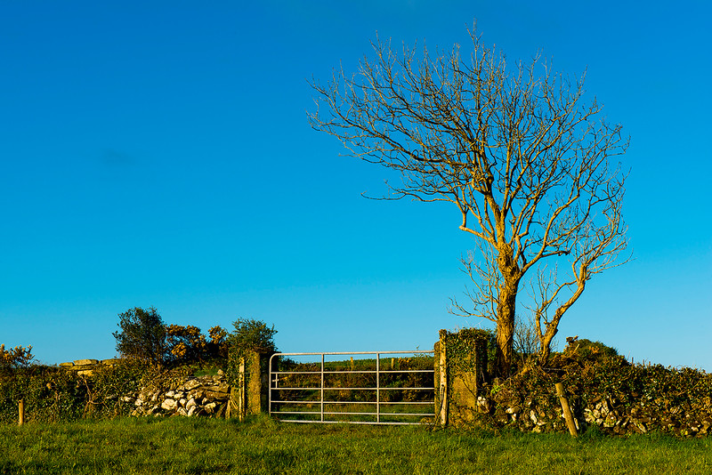 Morning Light Farm Gate; Akahista, Ireland 2017