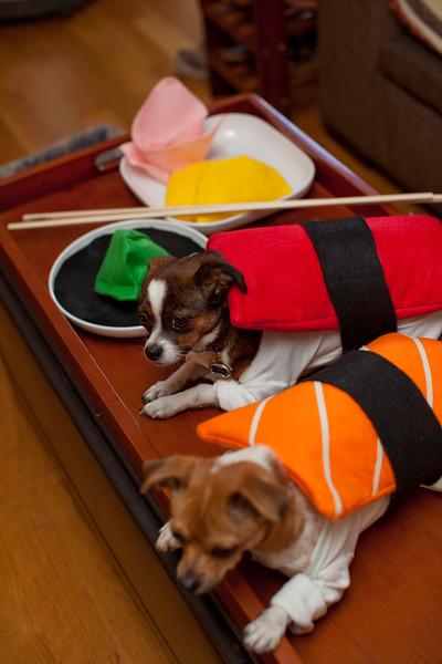 Dog-sushi-halloween2-6.jpg