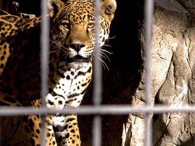 Wildlife - Zoo