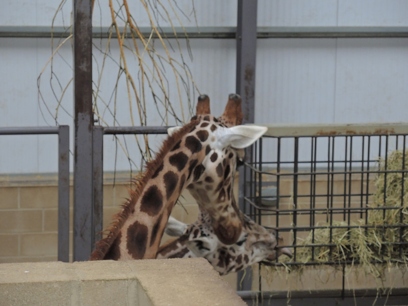 Cotswold Wildlife Park Nov 2013 082.JPG