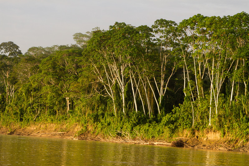 Rainforest95.jpg