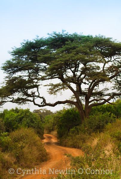 African Path .jpg
