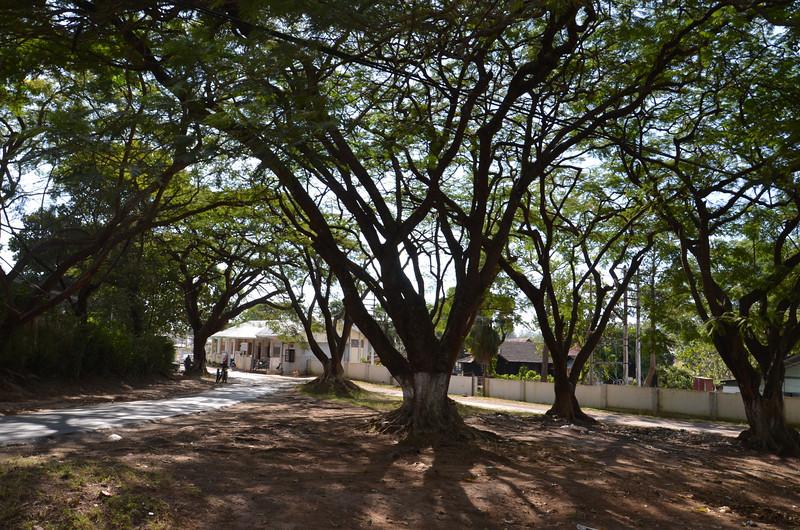 DSC_4661-street-trees.JPG
