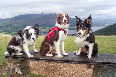 Twa Dogs +1 In Thornthwaite (4)