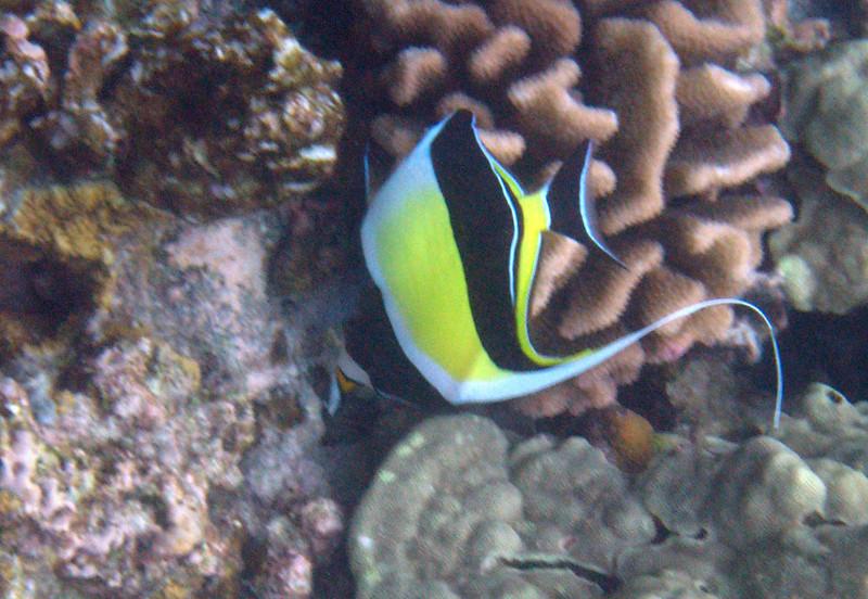 524- 20080416- Hawaii 20-Snorkelling IMG_0785.jpg