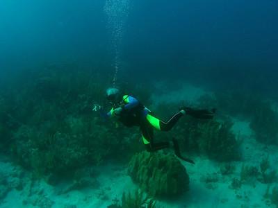 Vieques Scuba Patti's Reef, Castle Reef