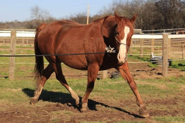 REF horses 1