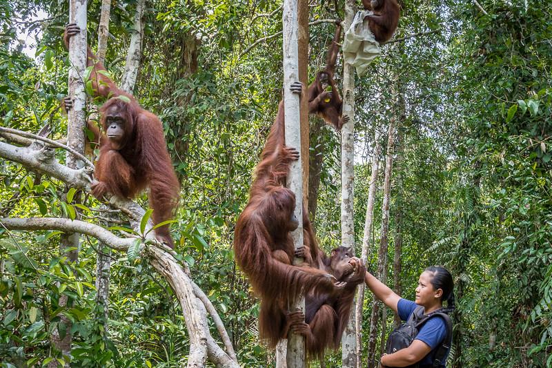 Borneo-2227.jpg