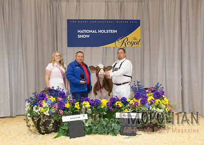 Red and White Holstein Presentation Photos