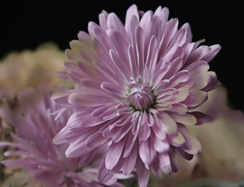 November Bouquet