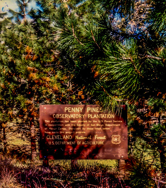 Penny Pines Cleveland Nat Forest 001.jpg