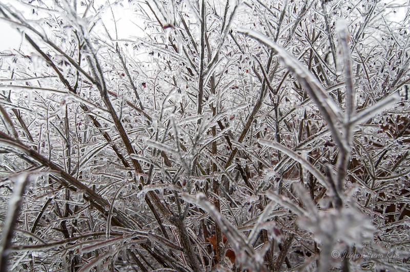 Winter-1006.jpg