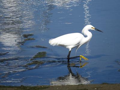 Wildlife - Birds of the Presidio