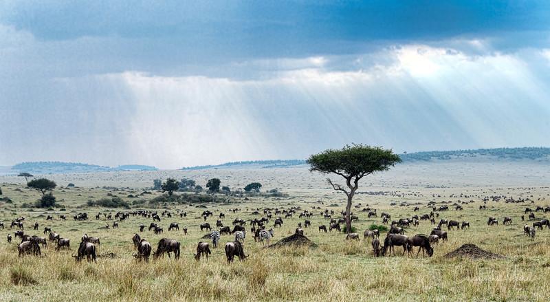 Sep022013_masai mara 1_4730.jpg