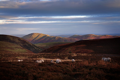 Longmynd, Stretton Hills and area