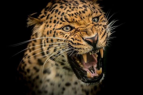 Wildlife & Sanctuarys
