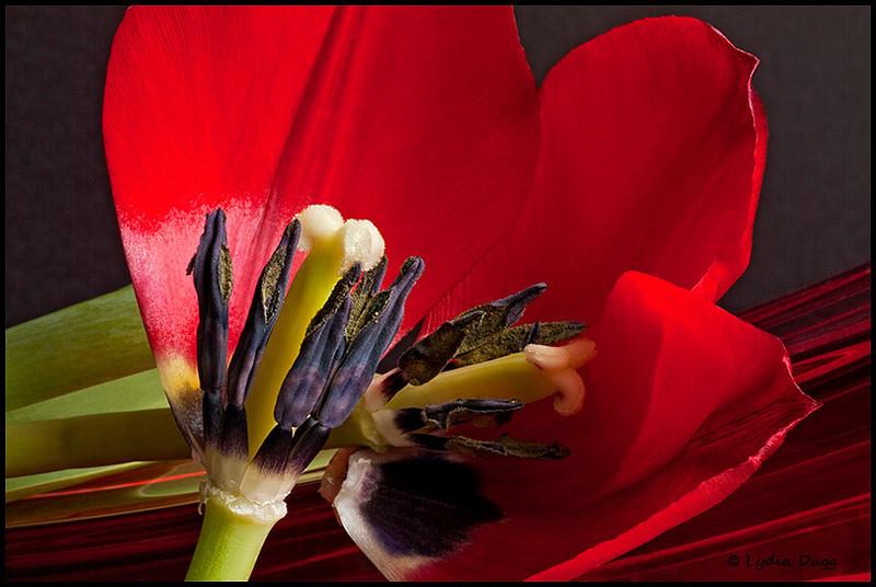 Tulip Time!