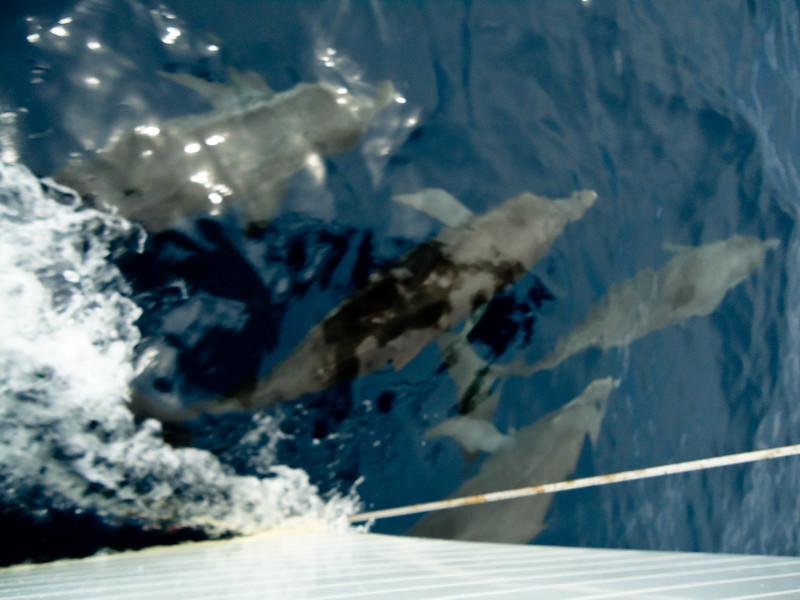 dolphins_4856880764_o.jpg