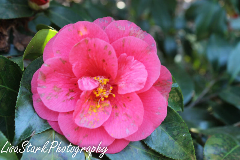 Atlanta Botanical Garden-3.jpg