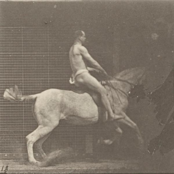 Horse Pandora jumping a hurdle, saddled with nude rider