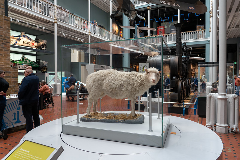 Dolly the sheep at the National Museum of Scotland
