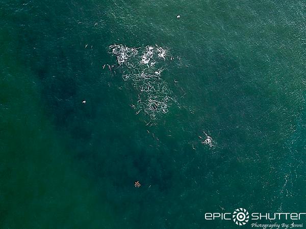 September 27, 2021, Spinner Sharks Feeding, Cape Point