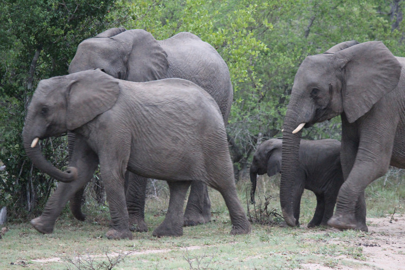 Africa Trip 2012 359.jpg