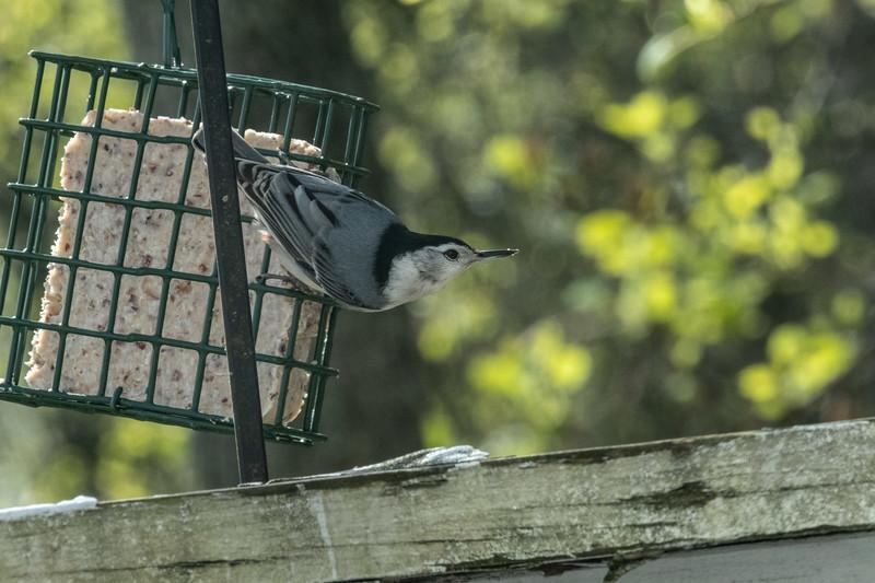 birdfeeder-7216.jpg