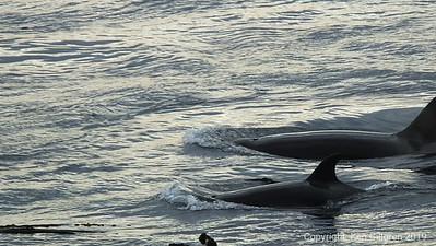 Lime Kiln Orcas